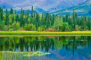 Pond and Boreal Forest, Alaska - Photo  copyright Fredrik Norrsell