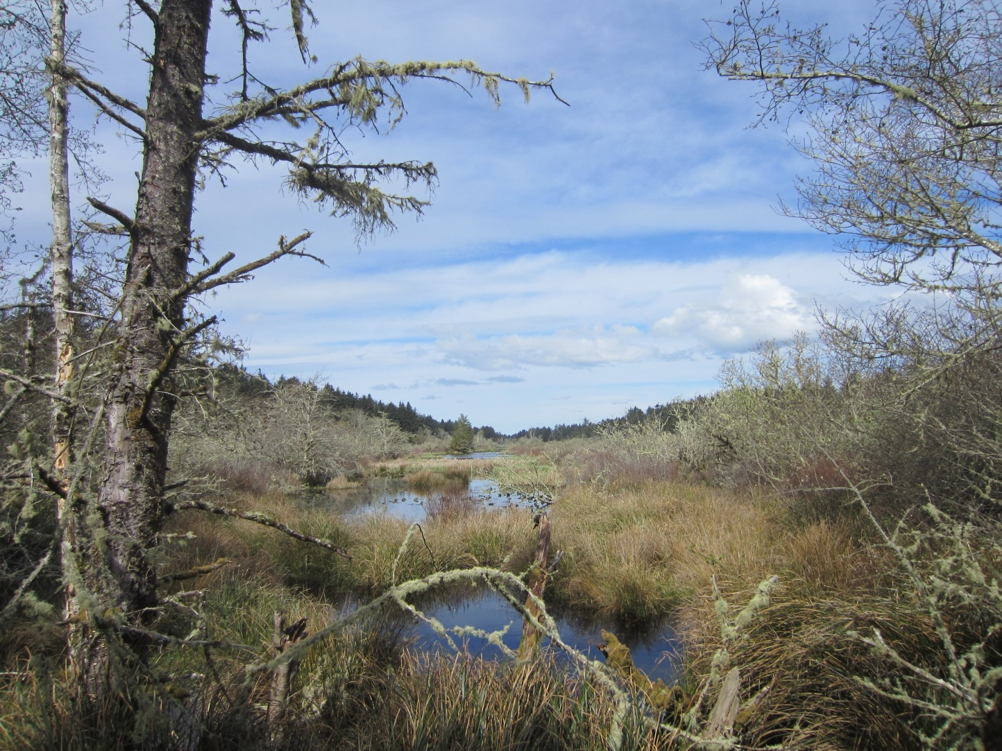 New conservation property near Leadbetter State Park on the Long Beach Peninsula.