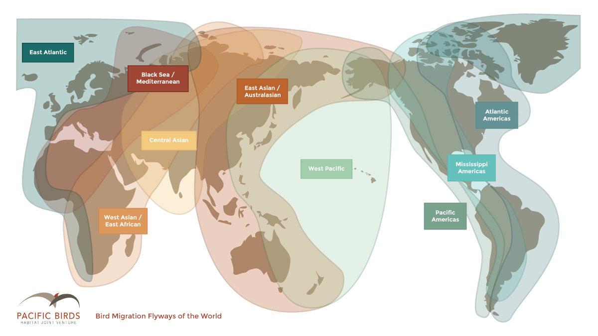 World Flyway Map