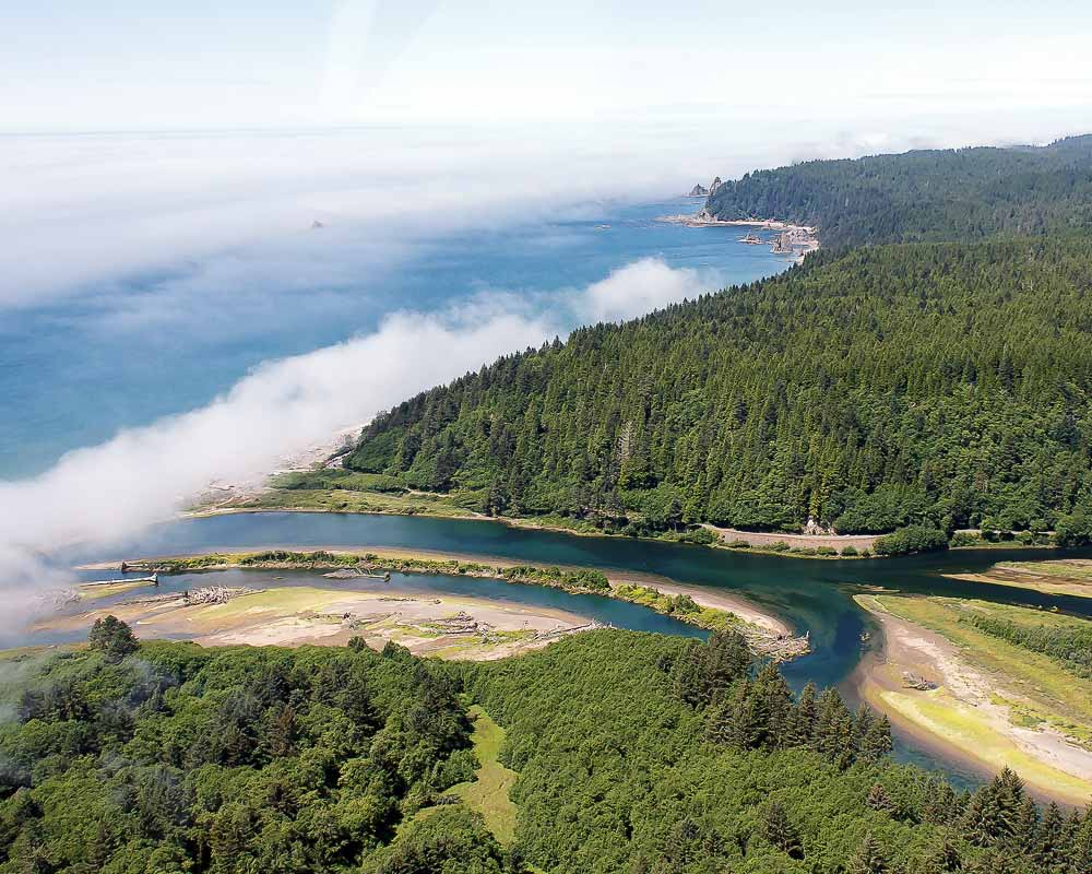 Habitat: Estuary