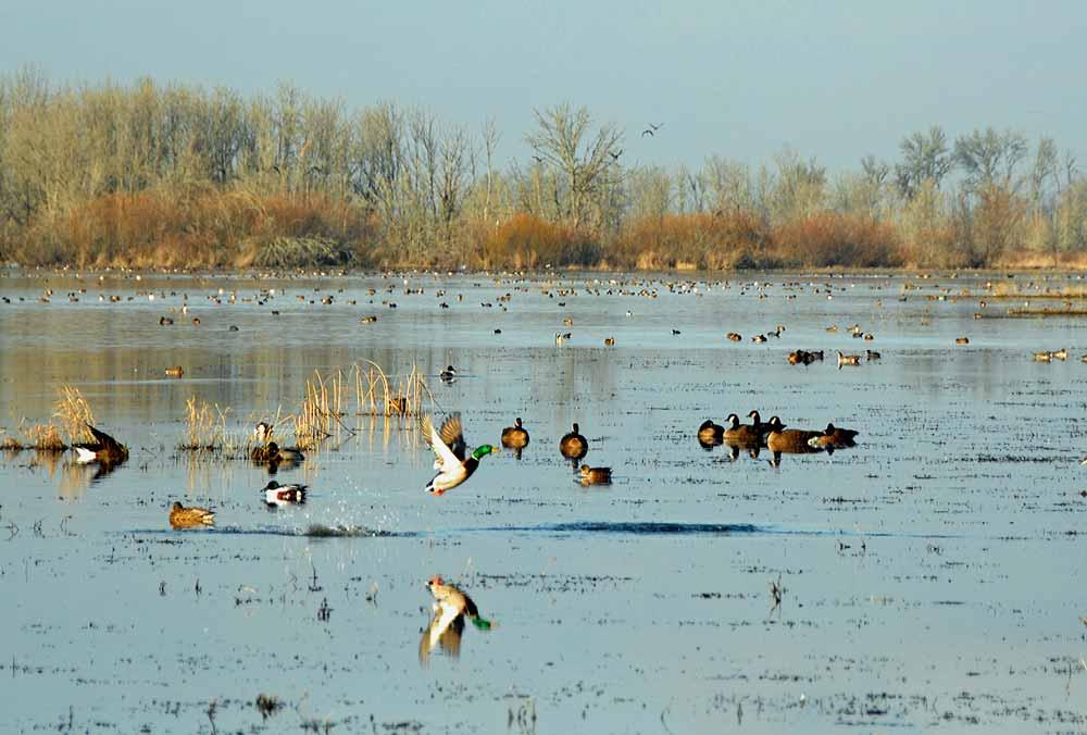 Habitat: Freshwater Wetlands