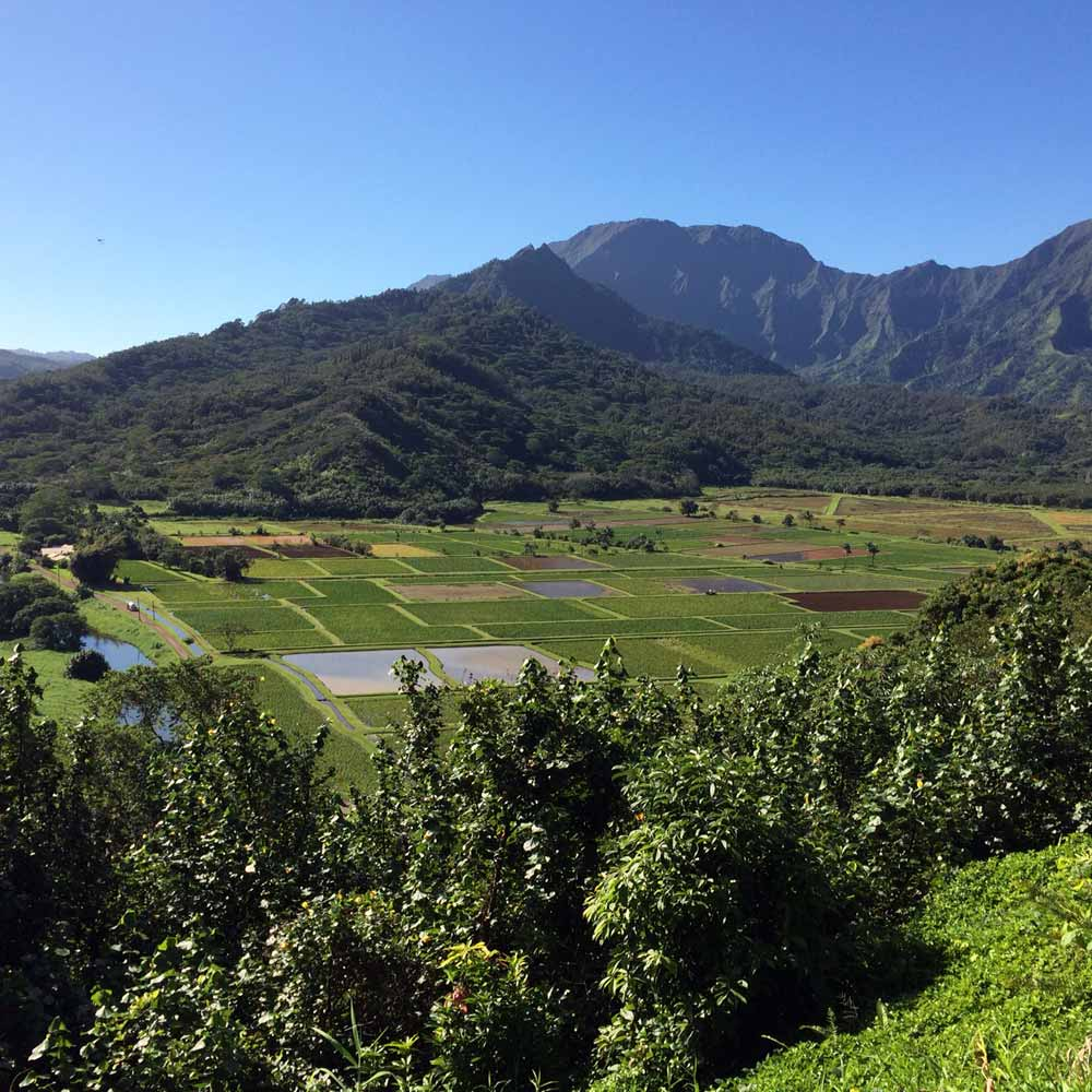 Habitat: Hawaii coastal wetland