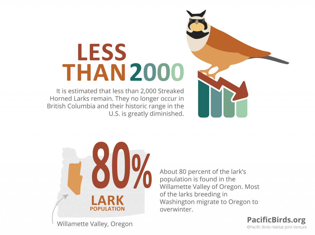 Streaked Horned Larks By the Numbers.