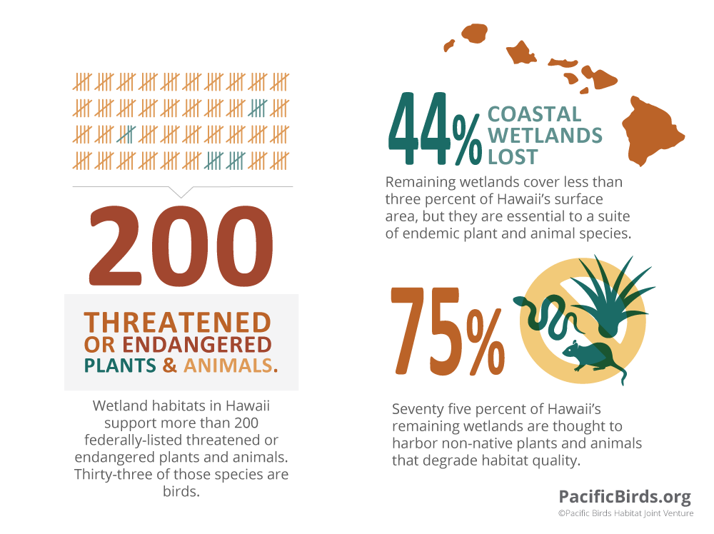 Hawaii Wetlands By the Numbers.