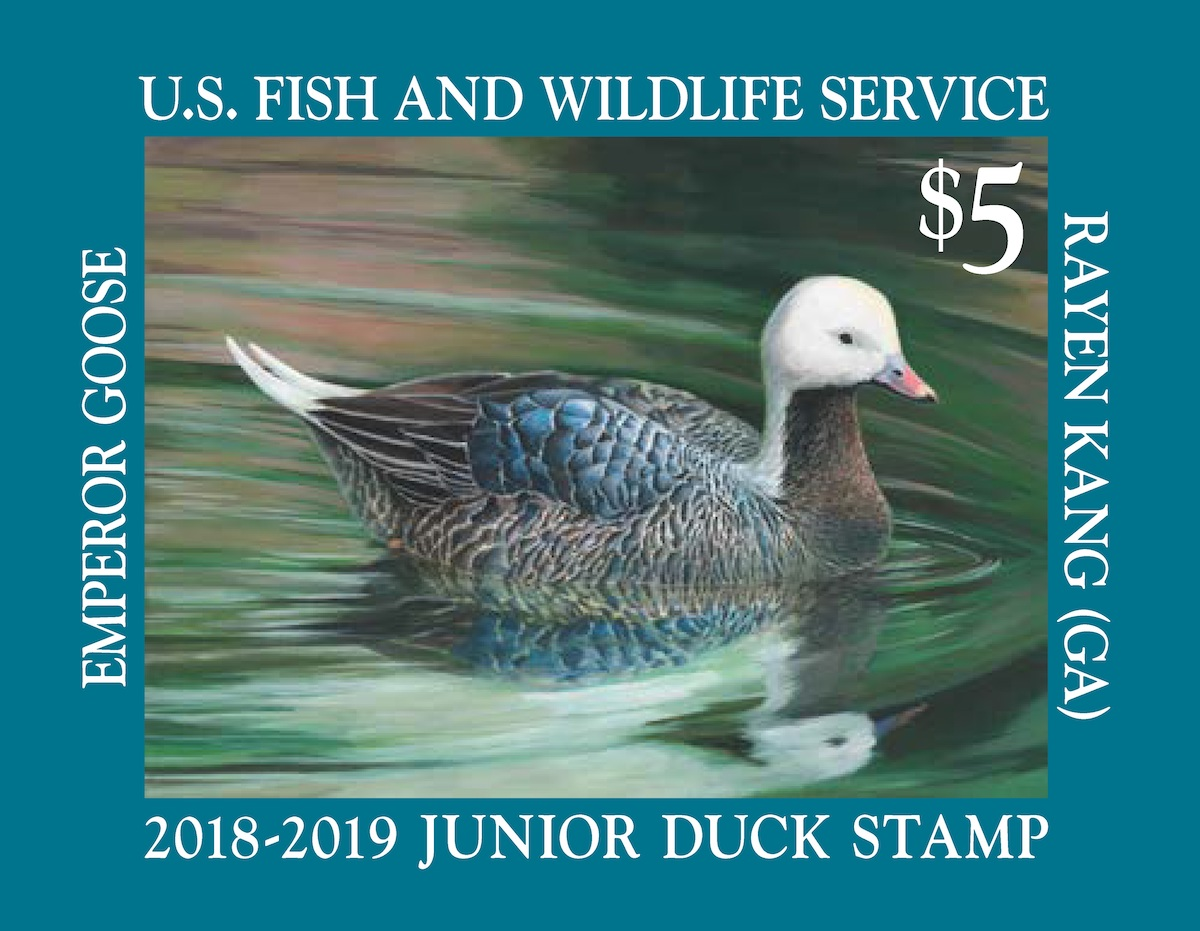The 2018-19 Junior Duck Stamp by Rayen Kang depicts an Emperor Goose.<BR>U. S. Fish and Wildlife Service